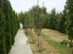 Vila de vanzare 7 camere zona Snagov-Lac, Ilfov 400 mp
