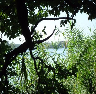 Teren de vanzare zona Lac Snagov 7000 mp